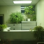 office-plant