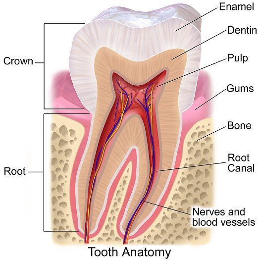 teeth-cavities