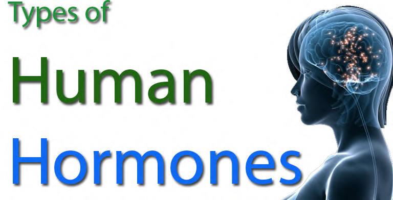 types-of-human-hormones
