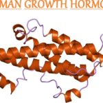human-growth-hormone